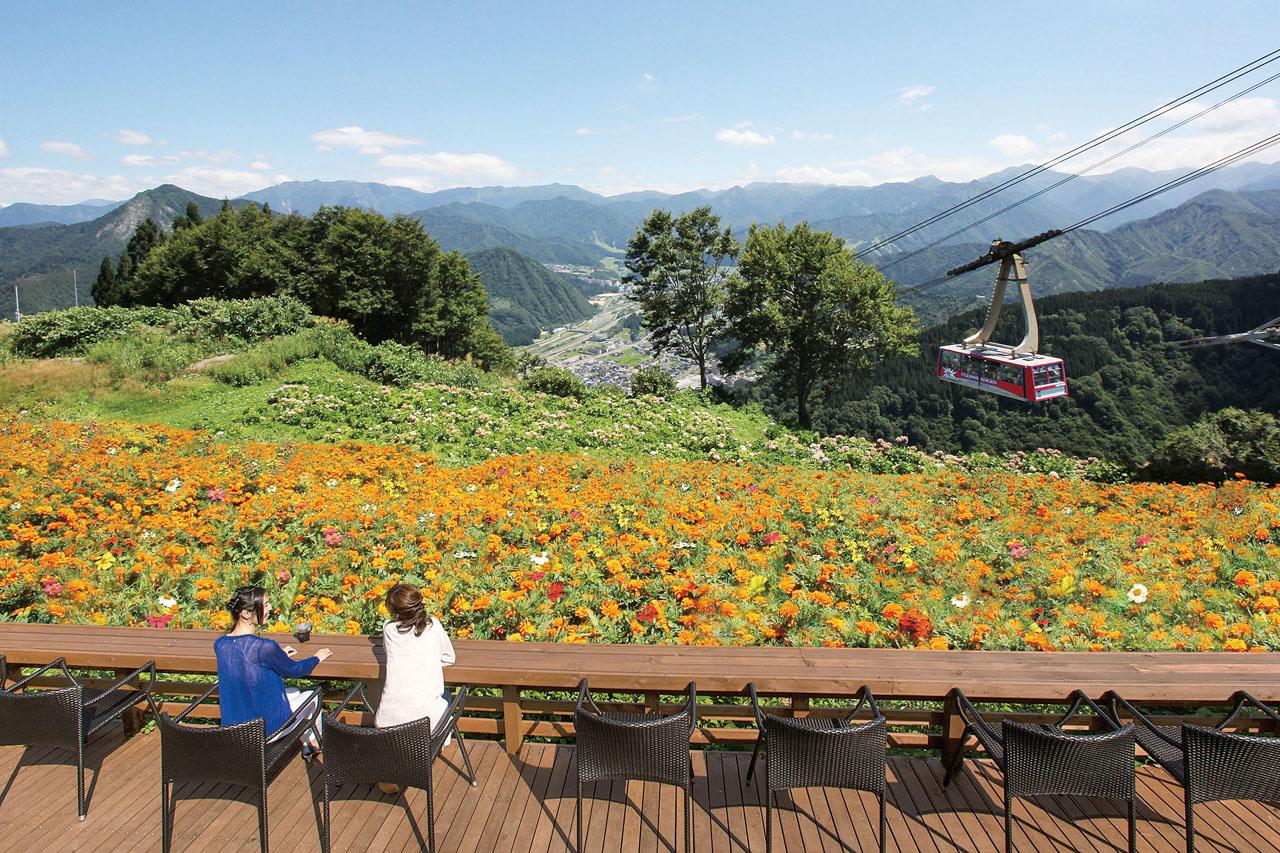 湯沢高原ロープウェイ/高山植物園アルプの里
