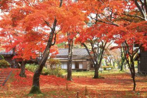 【2020年版】定番の名所から穴場まで!新潟県の紅葉スポット53選の画像32