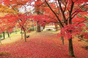 【2020年版】定番の名所から穴場まで!新潟県の紅葉スポット53選の画像20