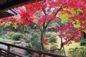 【2020年版】定番の名所から穴場まで!新潟県の紅葉スポット53選の画像30