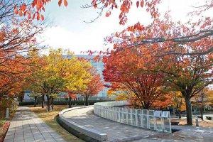 【2020年版】定番の名所から穴場まで!新潟県の紅葉スポット53選の画像14