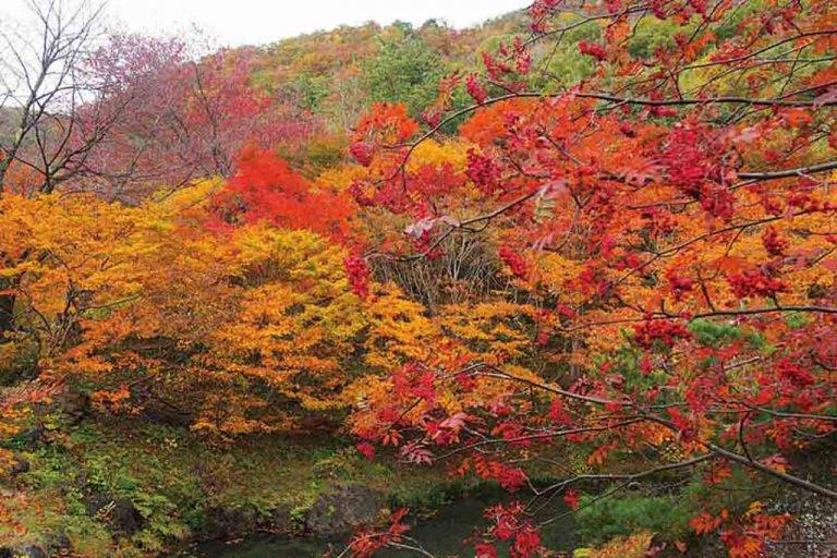 【2020年版】定番の名所から穴場まで!新潟県の紅葉スポット53選の画像28