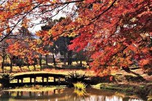 【2020年版】定番の名所から穴場まで!新潟県の紅葉スポット53選の画像34