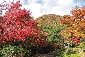 多彩な魅力を誇る新潟県の中心部!加茂市・燕市・三条市の紅葉スポット&おすすめベーカリーの画像9