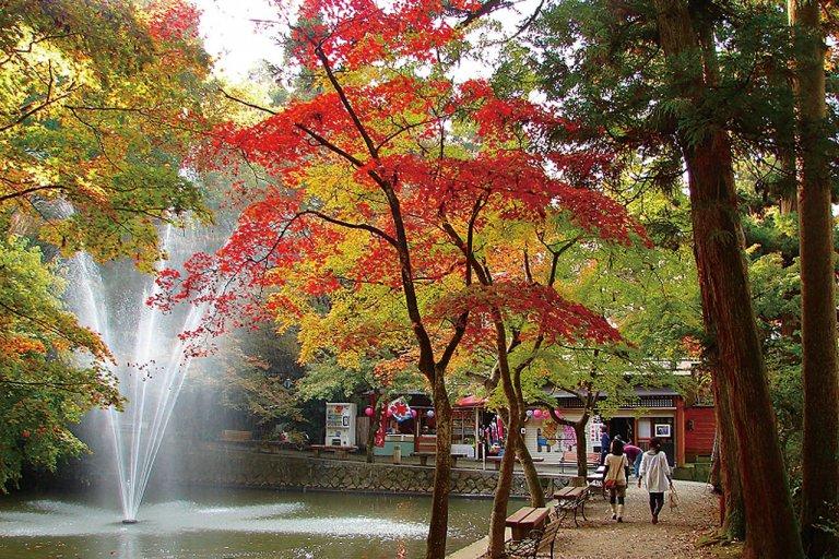 多彩な魅力を誇る新潟県の中心部!加茂市・燕市・三条市の紅葉スポット&おすすめベーカリーの画像12