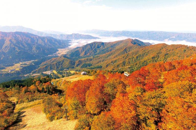 ダイナミックな紅葉の名所と山の恵みを堪能。魚沼市・南魚沼市の紅葉スポット&おすすめベーカリーの画像5