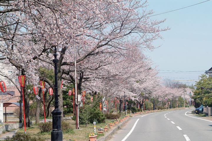 【2021年版】新潟のお花見スポット64選 桜の名所 定番&穴場の画像13
