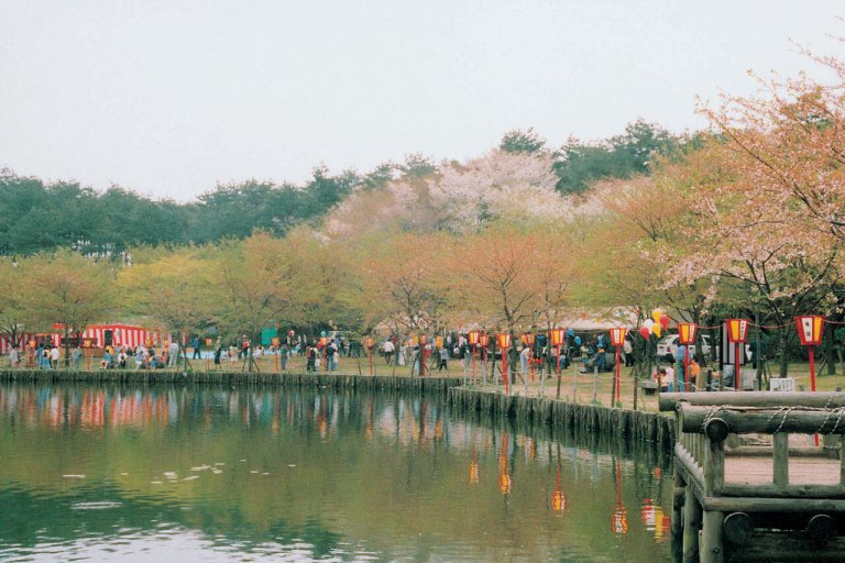 【2021年版】新潟のお花見スポット64選 桜の名所 定番&穴場の画像14