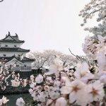 【2021年版】新潟のお花見スポット64選 桜の名所 定番&穴場の画像15