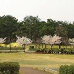 【2021年版】新潟のお花見スポット64選 桜の名所 定番&穴場の画像19