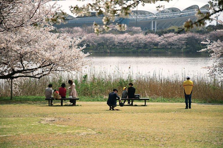【2021年版】新潟のお花見スポット64選 桜の名所 定番&穴場の画像2