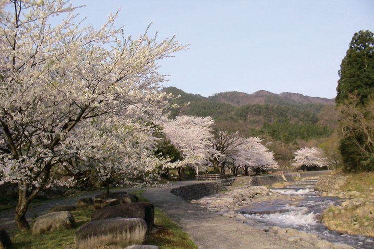 【2021年版】新潟のお花見スポット64選 桜の名所 定番&穴場の画像21
