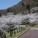 【2021年版】新潟のお花見スポット64選 桜の名所 定番&穴場の画像23