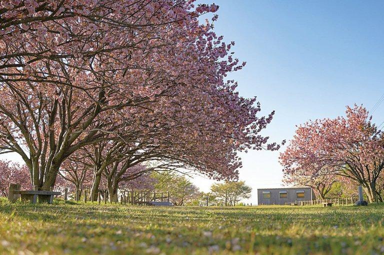 【2021年版】新潟のお花見スポット64選 桜の名所 定番&穴場の画像26