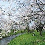 【2021年版】新潟のお花見スポット64選 桜の名所 定番&穴場の画像27