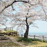 【2021年版】新潟のお花見スポット64選 桜の名所 定番&穴場の画像28
