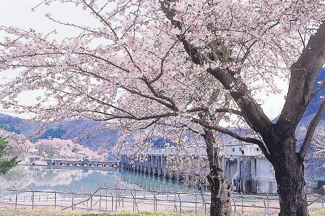 【2021年版】新潟のお花見スポット64選 桜の名所 定番&穴場の画像30
