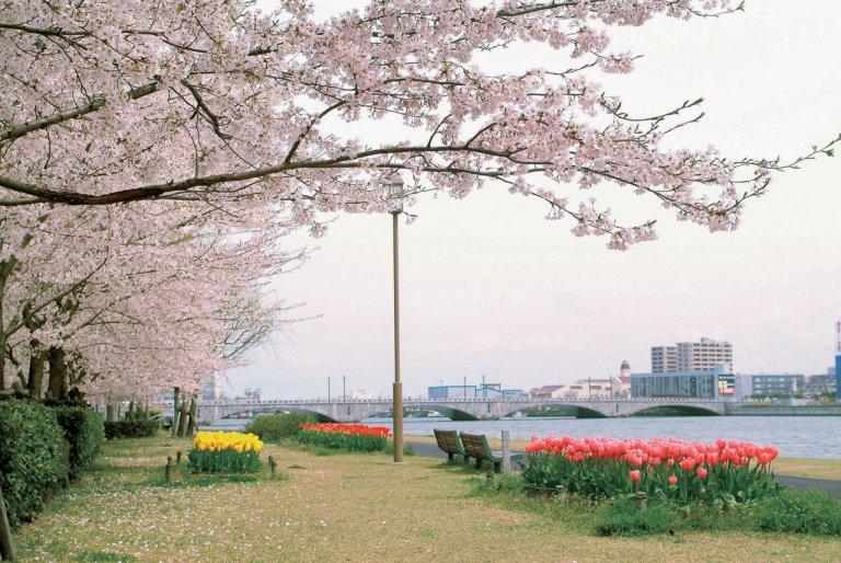 【2021年版】新潟のお花見スポット64選 桜の名所 定番&穴場の画像3