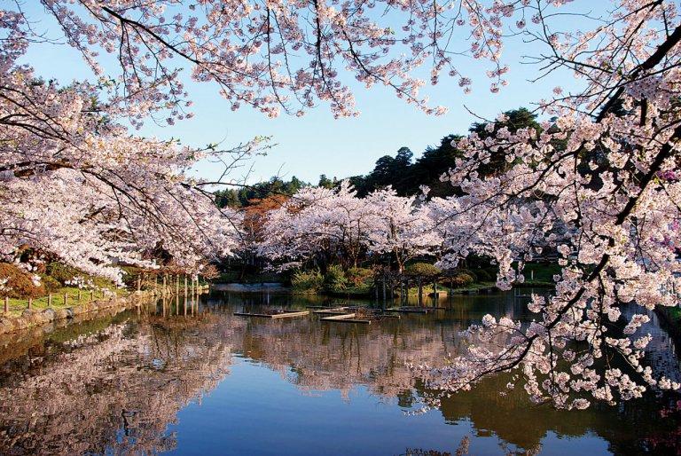 【2021年版】新潟のお花見スポット64選 桜の名所 定番&穴場の画像32