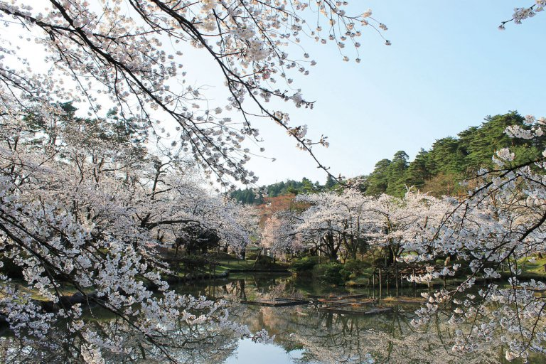【2021年版】新潟のお花見スポット64選 桜の名所 定番&穴場の画像33