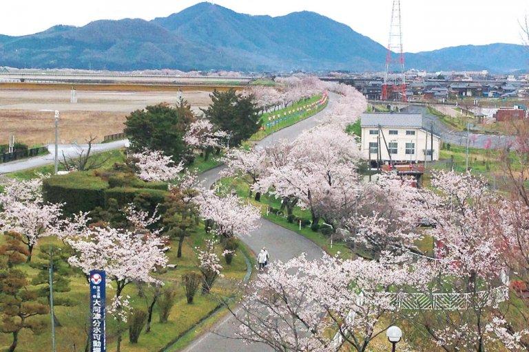 【2021年版】新潟のお花見スポット64選 桜の名所 定番&穴場の画像37