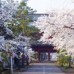 【2021年版】新潟のお花見スポット64選 桜の名所 定番&穴場の画像38
