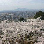 【2021年版】新潟のお花見スポット64選 桜の名所 定番&穴場の画像39