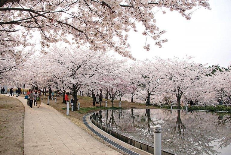 【2021年版】新潟のお花見スポット64選 桜の名所 定番&穴場の画像4