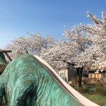 【2021年版】新潟のお花見スポット64選 桜の名所 定番&穴場の画像41