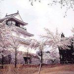 【2021年版】新潟のお花見スポット64選 桜の名所 定番&穴場の画像42