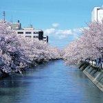 【2021年版】新潟のお花見スポット64選 桜の名所 定番&穴場の画像43