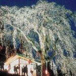 【2021年版】新潟のお花見スポット64選 桜の名所 定番&穴場の画像45