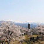 【2021年版】新潟のお花見スポット64選 桜の名所 定番&穴場の画像46