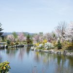 【2021年版】新潟のお花見スポット64選 桜の名所 定番&穴場の画像47