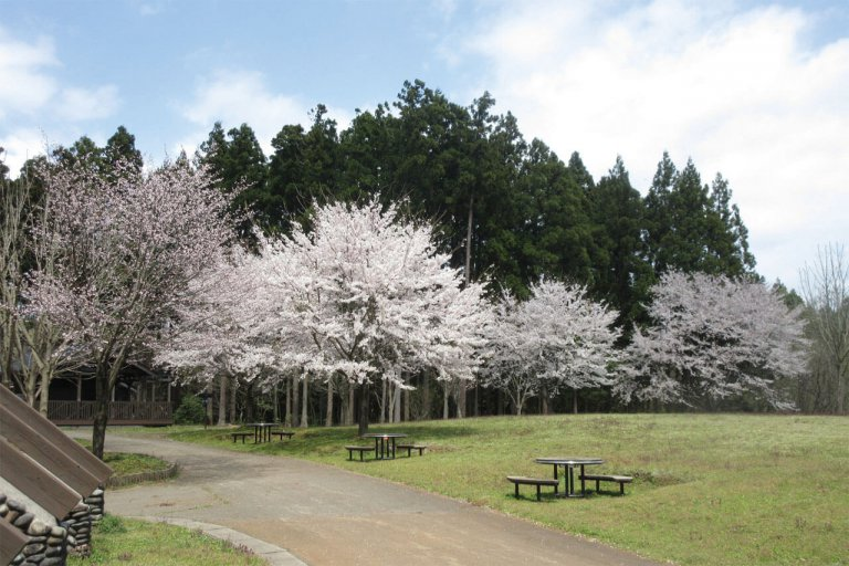 【2021年版】新潟のお花見スポット64選 桜の名所 定番&穴場の画像56