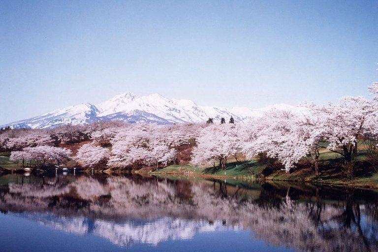 【2021年版】新潟のお花見スポット64選 桜の名所 定番&穴場の画像59