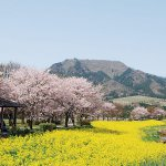 【2021年版】新潟のお花見スポット64選 桜の名所 定番&穴場の画像6