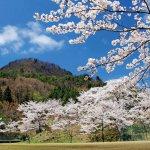 【2021年版】新潟のお花見スポット64選 桜の名所 定番&穴場の画像7