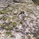 鳥屋野潟公園でキッチンカーのラーメン食べてきた。炭焼きだんごもハシゴして満腹♪の画像11