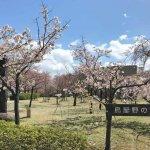 鳥屋野潟公園でキッチンカーのラーメン食べてきた。炭焼きだんごもハシゴして満腹♪の画像9