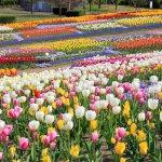 春から初夏の花めぐり。新潟のおすすめ花スポット25選の画像3