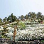 春から初夏の花めぐり。新潟のおすすめ花スポット25選の画像25