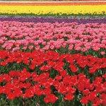 春から初夏の花めぐり。新潟のおすすめ花スポット25選の画像4
