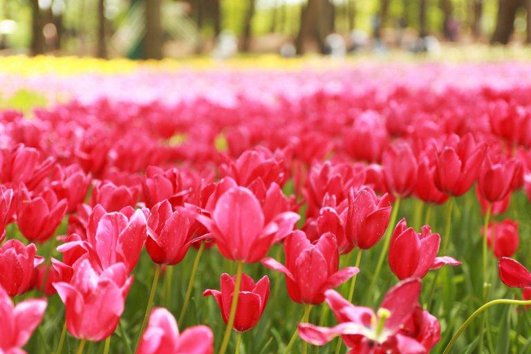 春から初夏の花めぐり。新潟のおすすめ花スポット25選