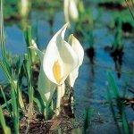 春から初夏の花めぐり。新潟のおすすめ花スポット25選の画像24