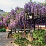 春から初夏の花めぐり。新潟のおすすめ花スポット25選の画像11