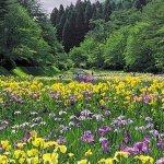 春から初夏の花めぐり。新潟のおすすめ花スポット25選の画像12