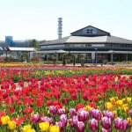 春から初夏の花めぐり。新潟のおすすめ花スポット25選の画像2
