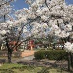 【2021年版】新潟のお花見スポット64選 桜の名所 定番&穴場の画像8