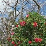 春から初夏の花めぐり。新潟のおすすめ花スポット25選の画像19